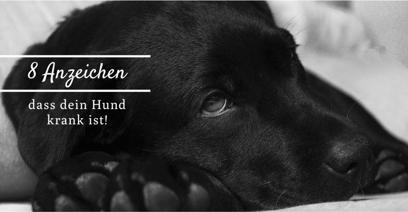 Read more about the article 8 Anzeichen dafür, dass dein Hund krank ist