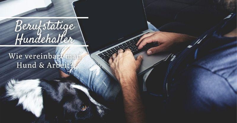 Read more about the article Wie vereinbart man Hund und Arbeit?