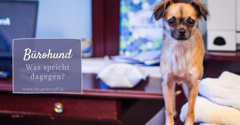 Read more about the article Bürohund: Was spricht dagegen?