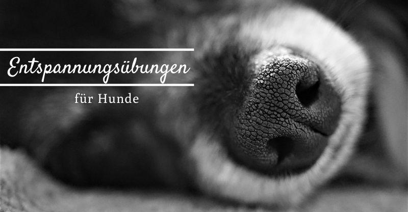 Read more about the article Entspannungsübungen für Hunde – Mit wenigen Handgriffen zu mehr Entspannung
