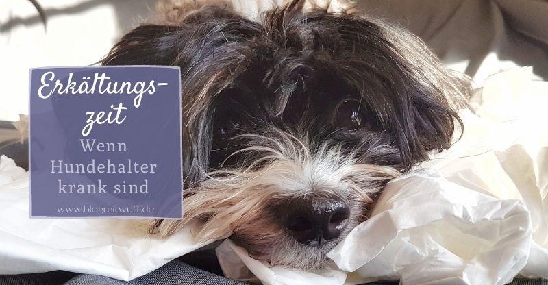 Read more about the article Erkältungszeit – Wenn Hundehalter krank sind