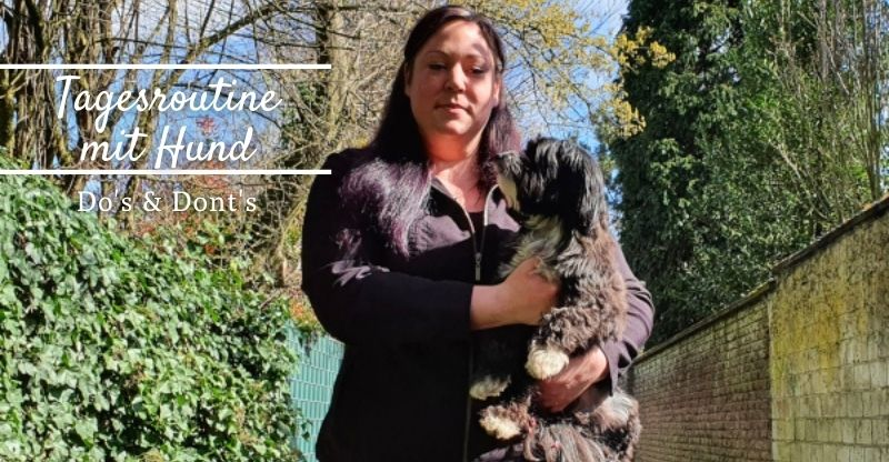 Read more about the article Tagesroutine mit Hund – Dos & Don'ts