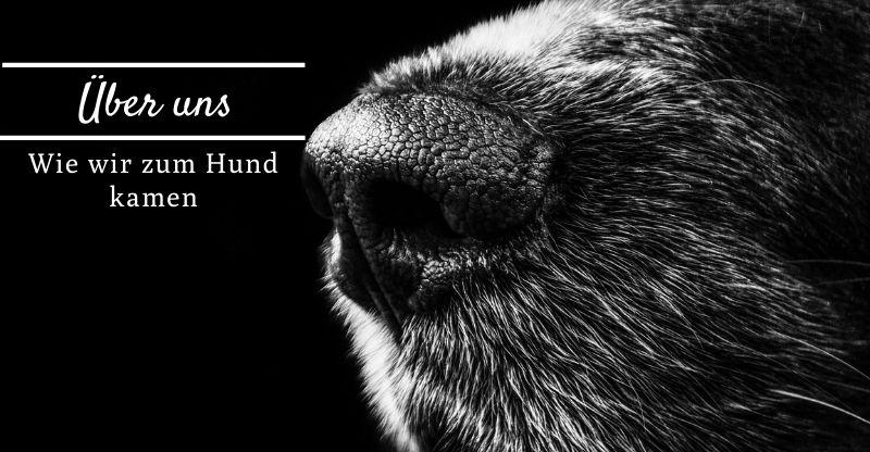 Read more about the article Wie wir zum Hund kamen