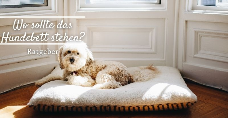 Read more about the article Wo sollte das Hundebett stehen?