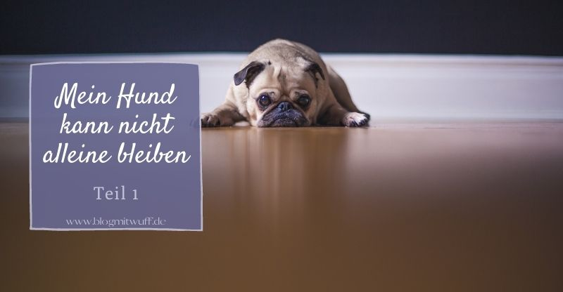 Read more about the article Serie: Mein Hund kann nicht alleine bleiben | Teil 1