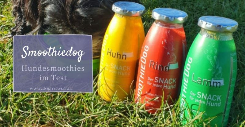 Read more about the article SmoothieDog – Der gesunde Smoothie für Hunde