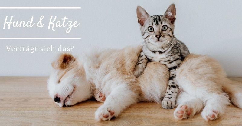Read more about the article Hund & Katze – Verträgt sich das?