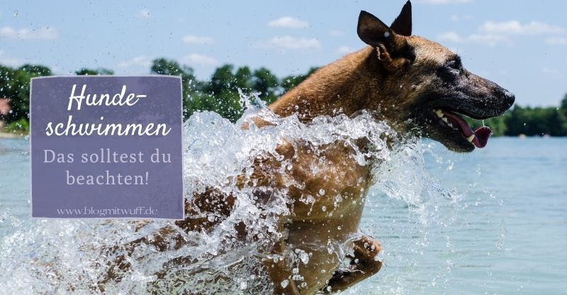 Read more about the article Hundeschwimmen – Das solltest du beachten