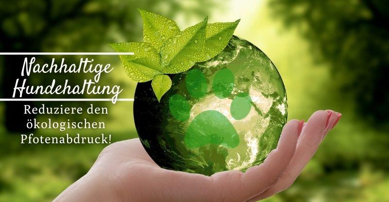 Read more about the article Nachhaltige Hundehaltung – Reduziere den ökologischen Pfotenabdruck!