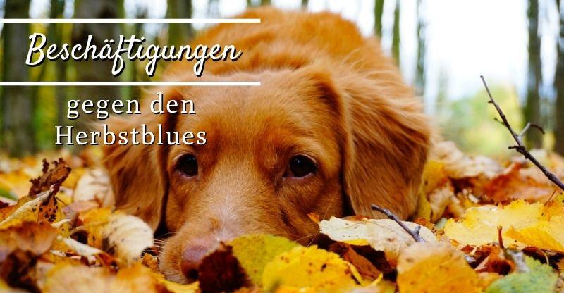 Read more about the article Beschäftigungen gegen den Herbstblues