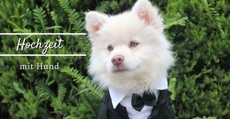 Read more about the article Hochzeit mit Hund