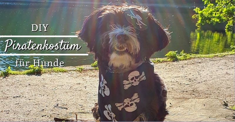 Read more about the article DIY Piratenkostüm für Hunde