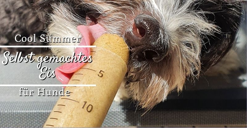 Read more about the article Leckeres Eis für coole Hunde