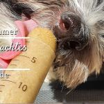 Leckeres Eis für coole Hunde