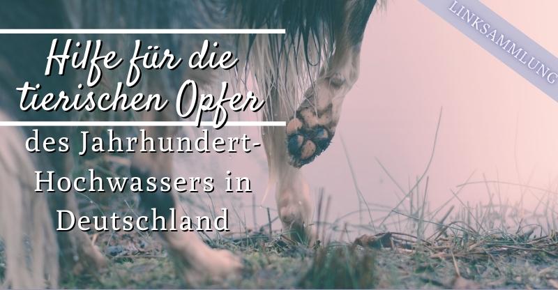 Read more about the article Jahrhunderthochwasser in Deutschland – So kannst du betroffenen Tieren helfen