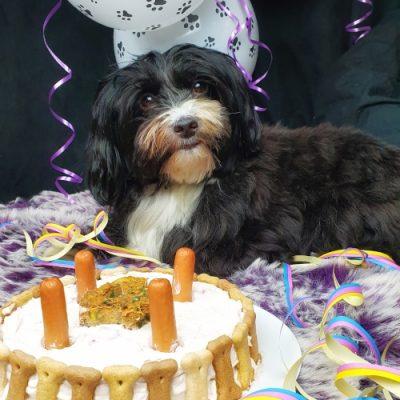 Buffy mit Geburtstagstorte für Hunde