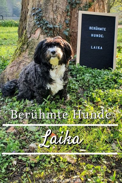Pin Berühmte Hunde Laika
