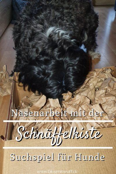 Schnüffelkiste für Hunde