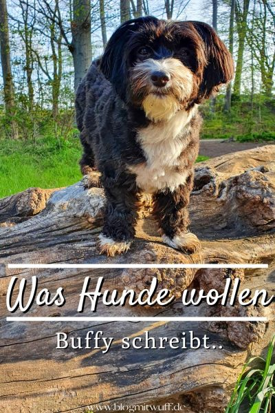 Pin Was Hunde wollen