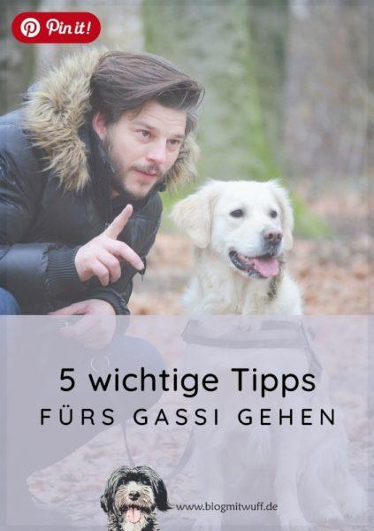 Pin it - 5 wichtige Tipps fürs Gassi gehen