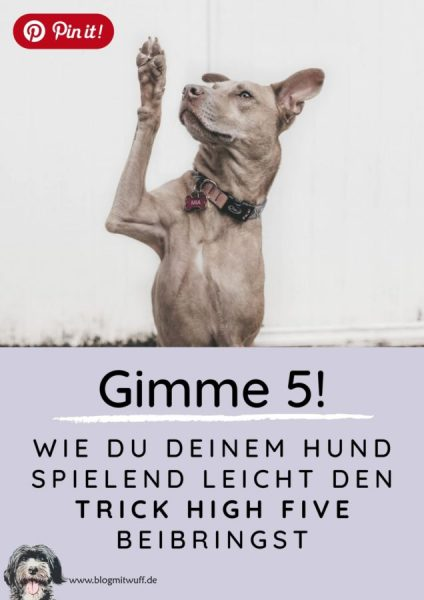 Pin it - Gimme 5 Wie du deinem Hund den Trick High Five beibringst