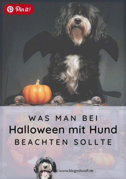 Pin it - Was man bei Halloween mit Hund beachten sollte