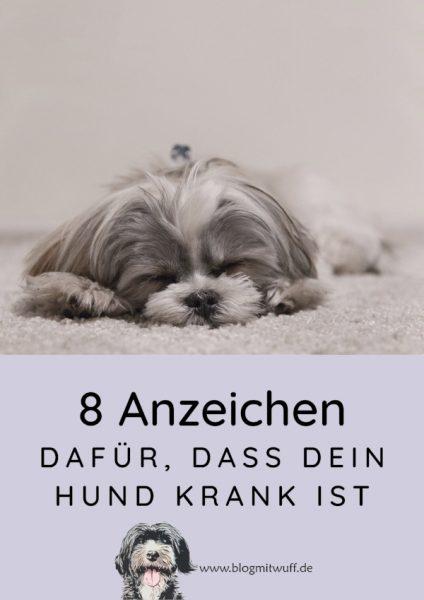 Pin zu 8 Anzeichen dafür dass dein Hund krank ist