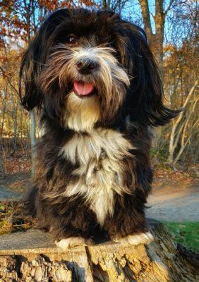 Tagesroutine mit Hund01