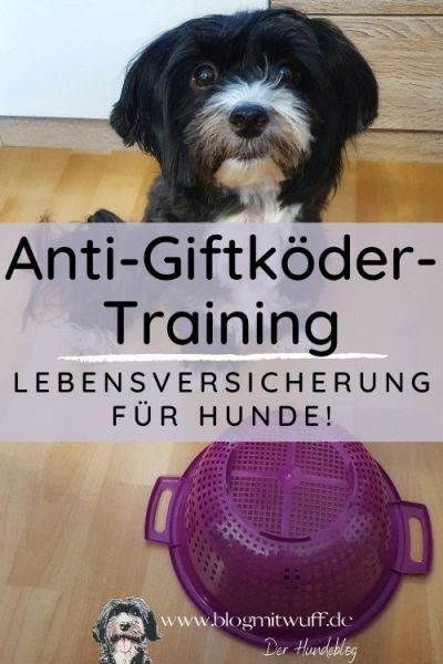 Titelbild zu Anti-Giftköder-Training