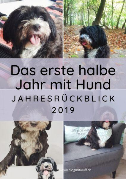 Titelbild zu Das erste halbe Jahr mit Hund