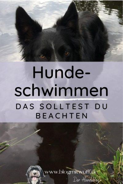 Titelbild zu Hundeschwimmen
