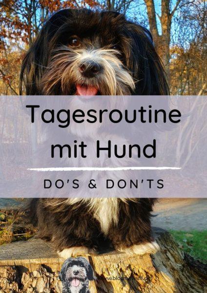Titelbild zu Tagesroutine mit Hund