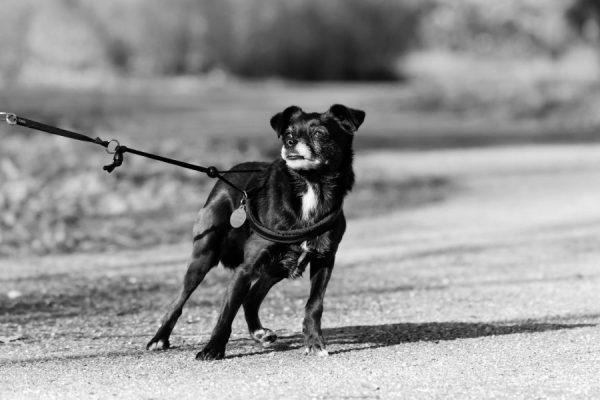 dog-4044102_1920