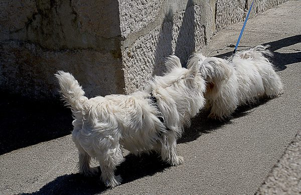 dogs-734743_1920