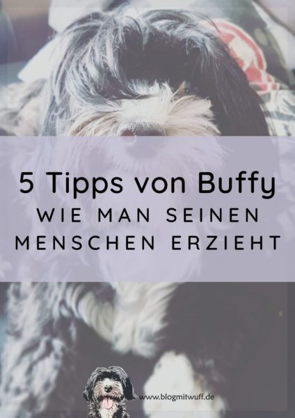 Titelbild zu 5 Tipps von Buffy wie man seinen Menschen erzieht