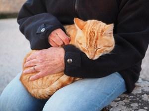 Assurance chat: prix et prise en charge