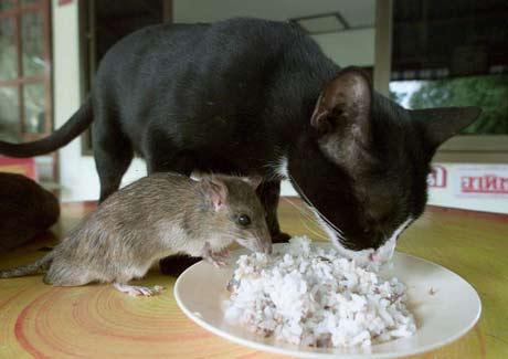 https://i1.wp.com/www.blogodisea.com/wp-content/uploads/2010/01/animales_humor_gato_raton.jpg