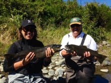 Two brown trout  that didn't get away