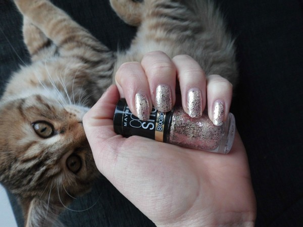 mittens-cutest-pixiebob-kitten-14-18-weken-1