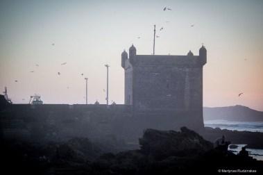 essaouira, morocco, wall, city wall, medina, birds