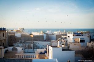 essaouira, medina, houses, riads, birds, sky