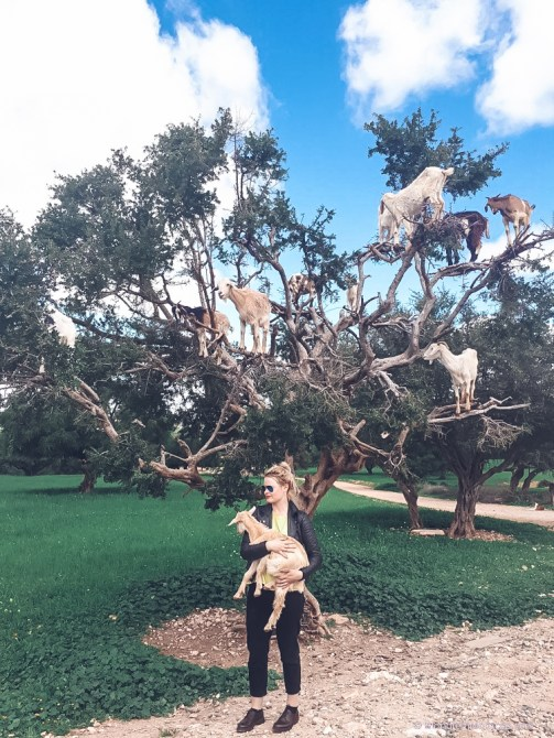 morocco, goats, tree, climbing, argan tree, girl