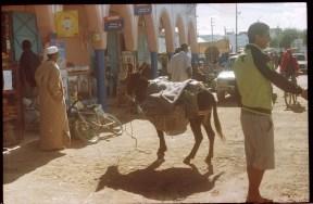morocco donkey street shops