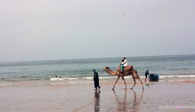 beach, camel, ride, ocean, morocco, camel ride