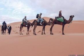 desert morocco camel dunes merzouga ride