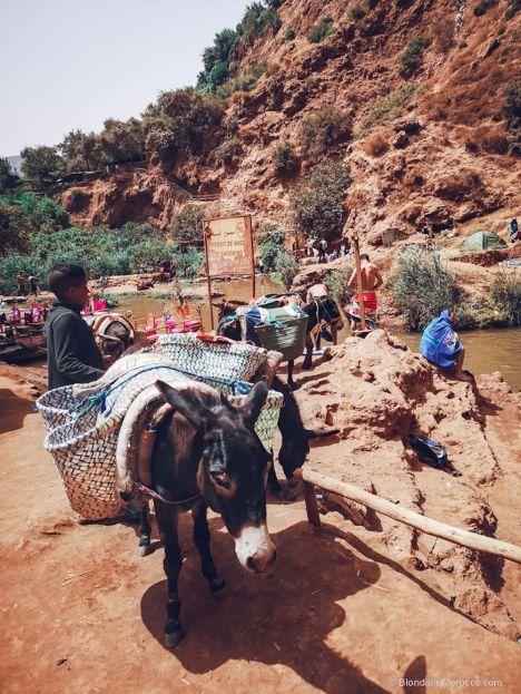 ouzoud, waterfall, river, lake, people, donkey