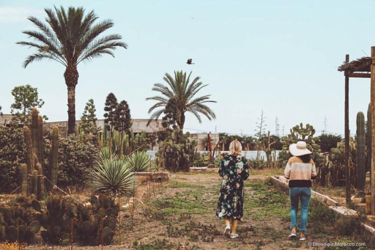 cactus cacti park farm marrakech morocco thiemann