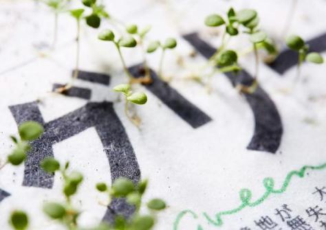 green-newspaper-blooming
