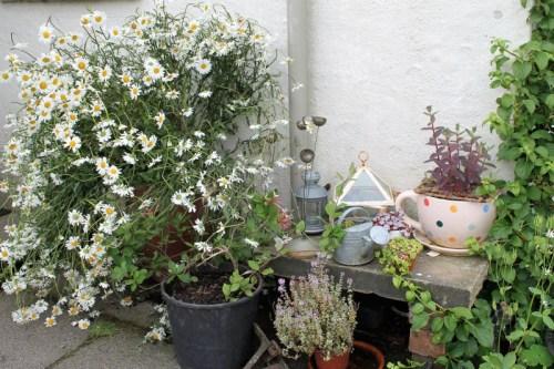 sarah-garden
