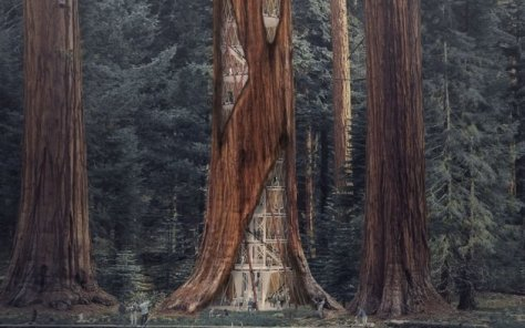 sequoia-skyscraper-base
